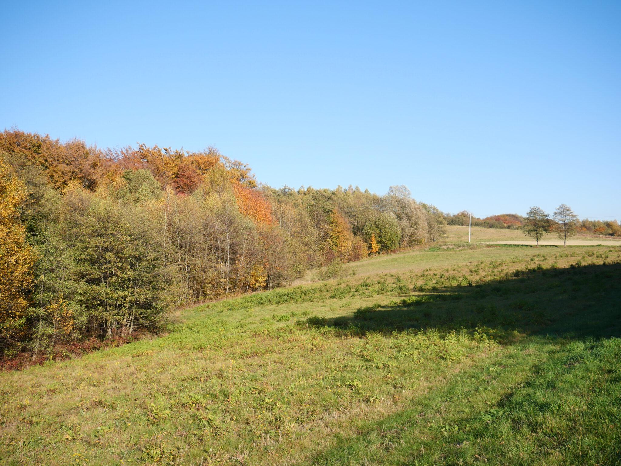 Działka na sprzedaż, 1,4453 ha, Głobikowa